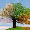 to everything there is a season, blog post by Judy Fox